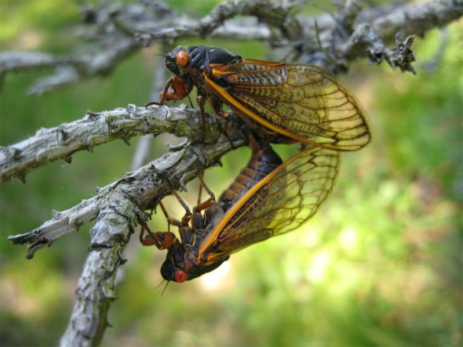 nature's fascinating acts of precision … the lifecycle of the cicada!