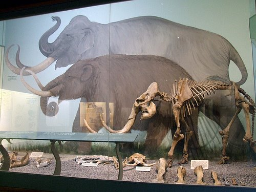 Opinions on Island gigantism  Gigantism In Animals